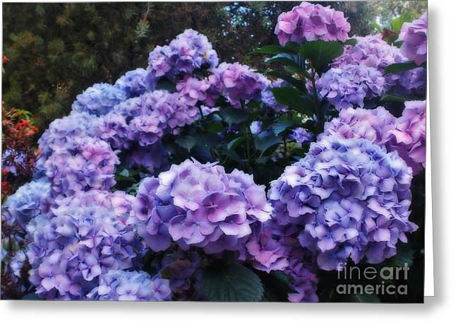 Pink And Mauve Hydrangeas Greeting Card by Kaye Menner