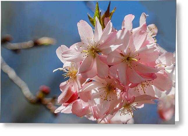 Pink And Pretty Greeting Card by Robert Hebert