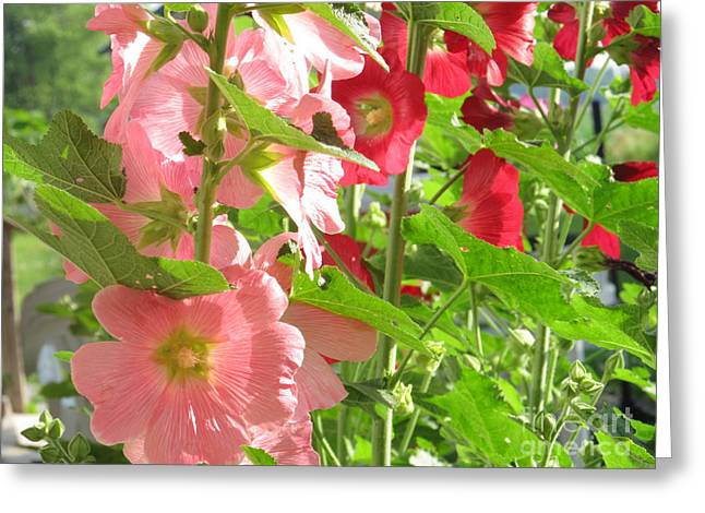 Pink And Red Group Greeting Card by Tina M Wenger