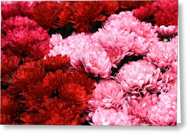 Pink And Red Greeting Card by Menachem Ganon