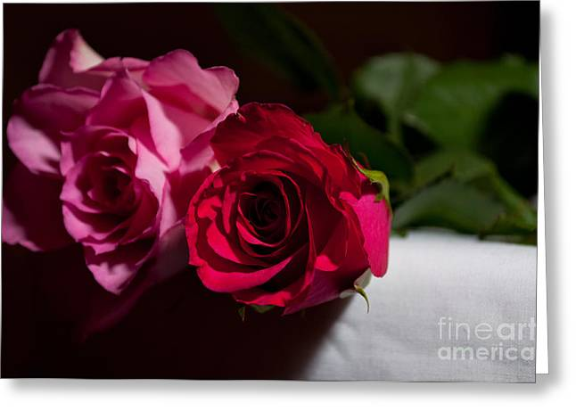Greeting Card featuring the photograph Pink And Red Rose by Matt Malloy