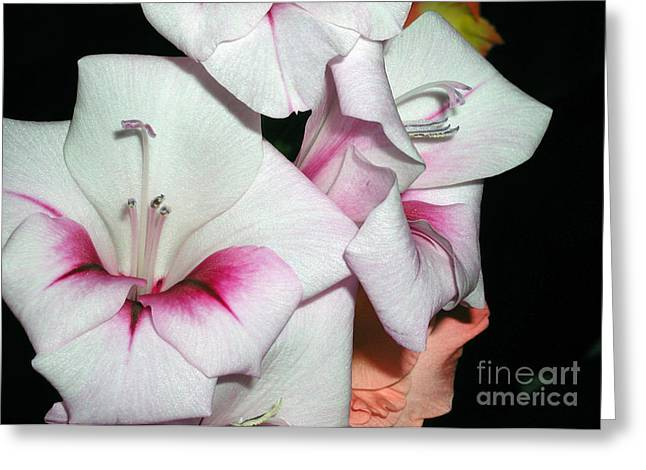 Pink And White Beauties Greeting Card