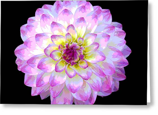 Pink And White Dahlia Posterized On Black Greeting Card by Rosemary Calvert