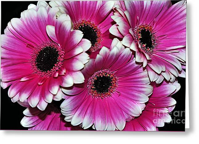 Pink And White Ornamental Gerberas Greeting Card by Kaye Menner