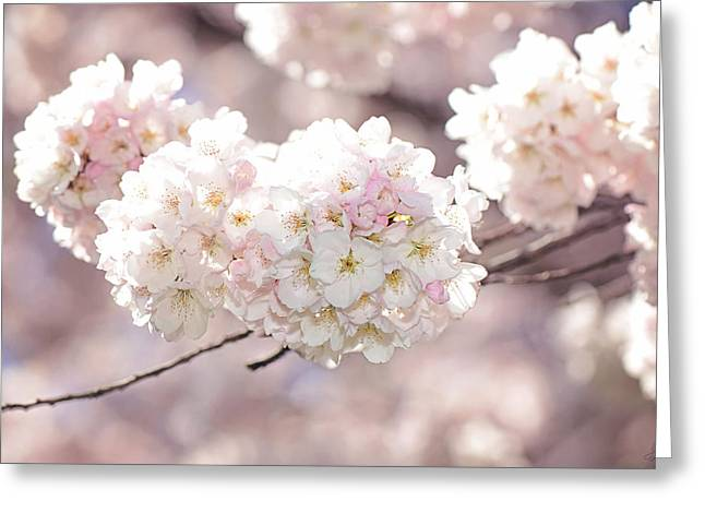 Pink And White Pompoms Of Light Greeting Card by Lisa Knechtel