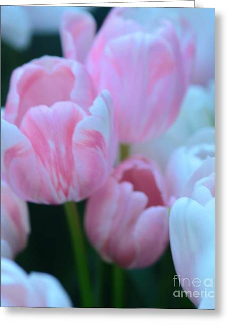 Pink And White Tulips Greeting Card by Kathleen Struckle