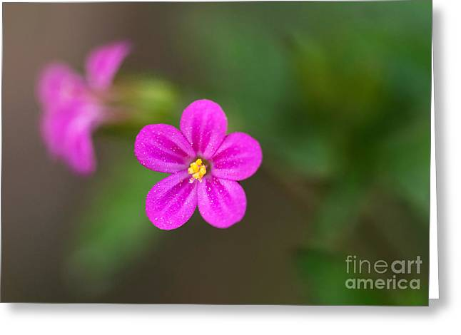Pink And Yellow Flowers With Green Blurry Background Greeting Card by Jaroslaw Blaminsky