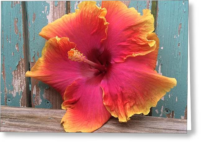 Tropical Pink And Yellow Hibiscus  Greeting Card