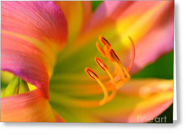 Pink And Yellow Greeting Card by Kathleen Struckle