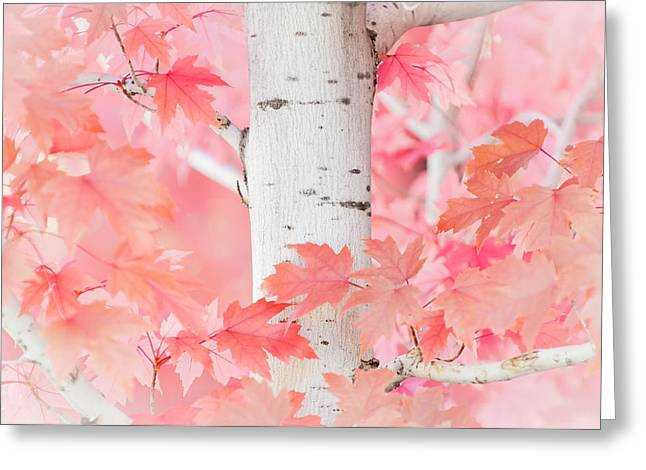 Pink Aspen Greeting Card by Daniel Huerlimann