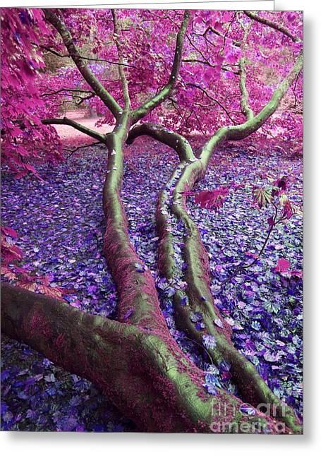 Pink Autumn Greeting Card by Sally Barnett