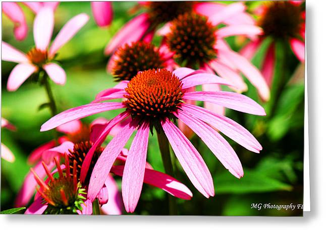 Pink Beauty Greeting Card by Marty Gayler