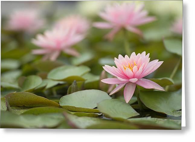 Pink Blossom  Greeting Card by Joey  Maganini