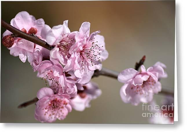 Pink Blossom Greeting Card by Joy Watson