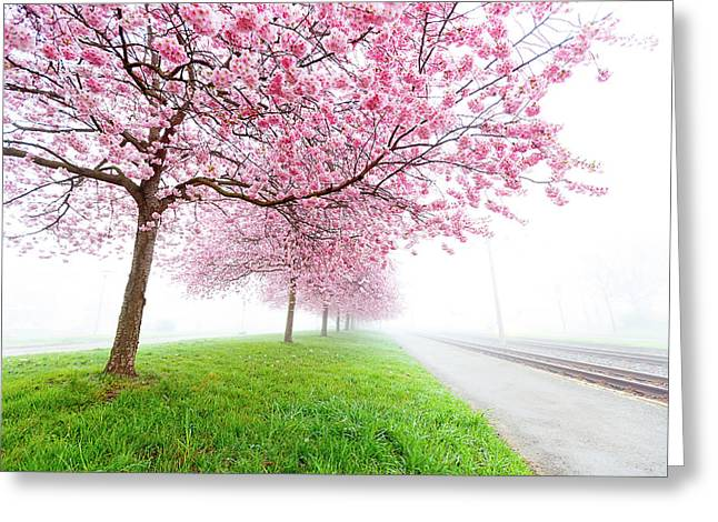 Pink Blossom On Trees Greeting Card by Wladimir Bulgar