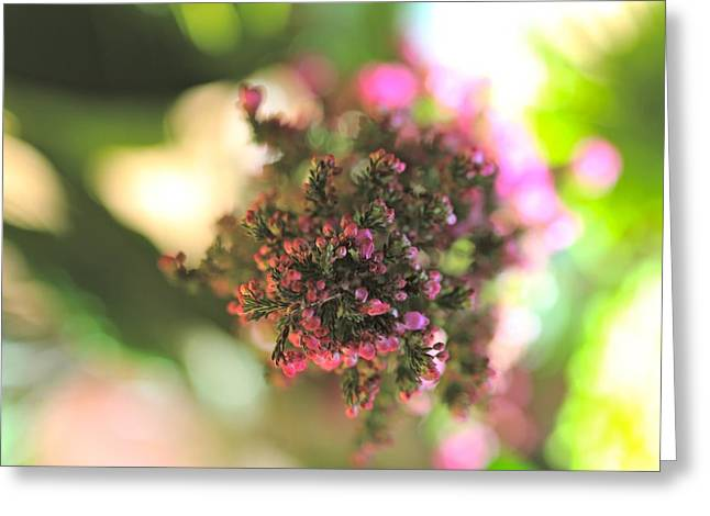 Pink Blossom Greeting Card by Tracy Male