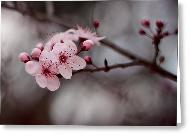 Pink Blossoms Greeting Card by Michelle Wrighton