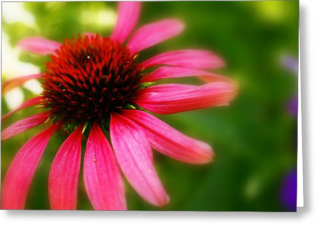 Pink Burst Of Color Greeting Card by Alexandra  Rampolla