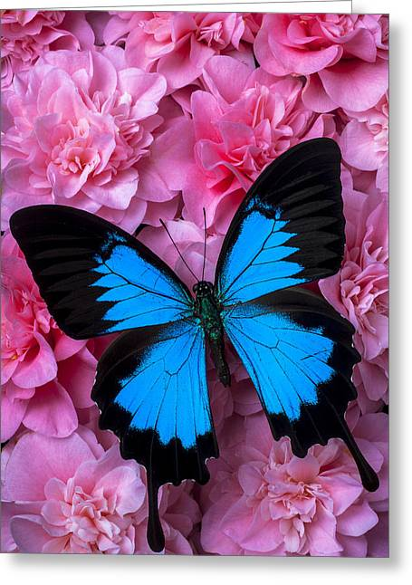 Pink Camilla And Blue Butterfly Greeting Card by Garry Gay