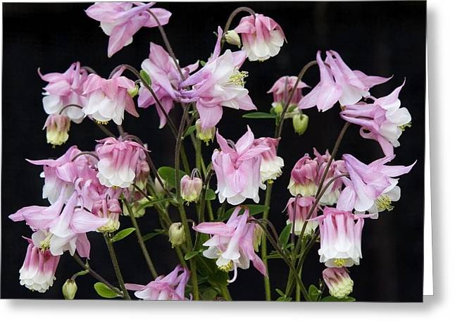Pink Chandelier Greeting Card