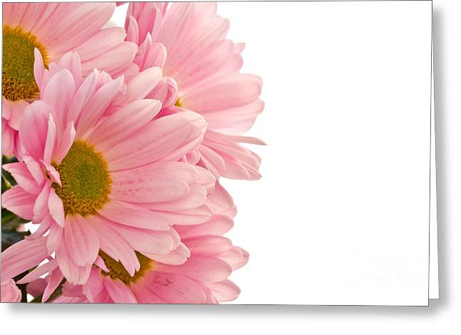 Pink Chrysanthemums Greeting Card by Boon Mee