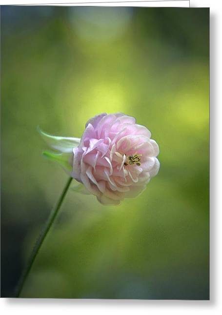 Pink Columbine Greeting Card by  Andrea Lazar