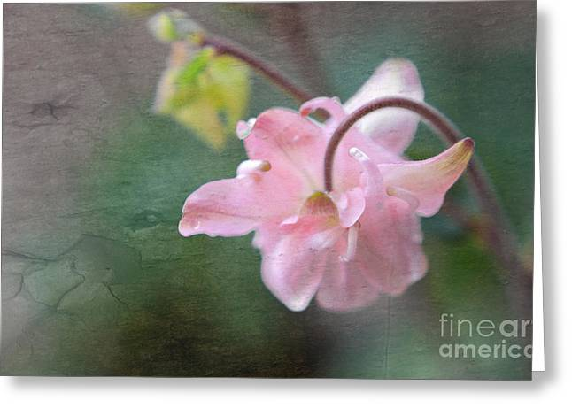 Pink Columbine Greeting Card by Charline Xia