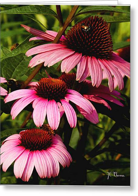Greeting Card featuring the photograph Pink Coneflowers by James C Thomas