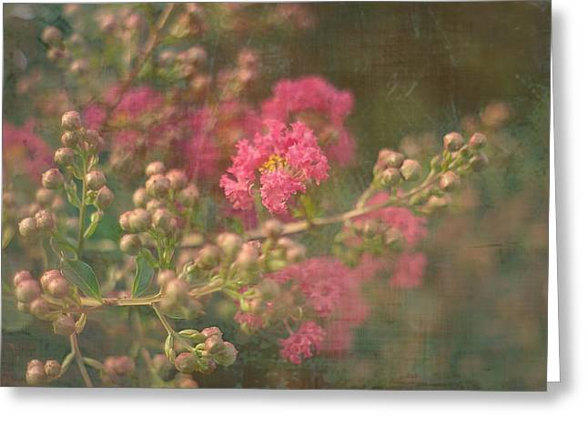 Pink Crepe Myrtle Greeting Card by Suzanne Powers