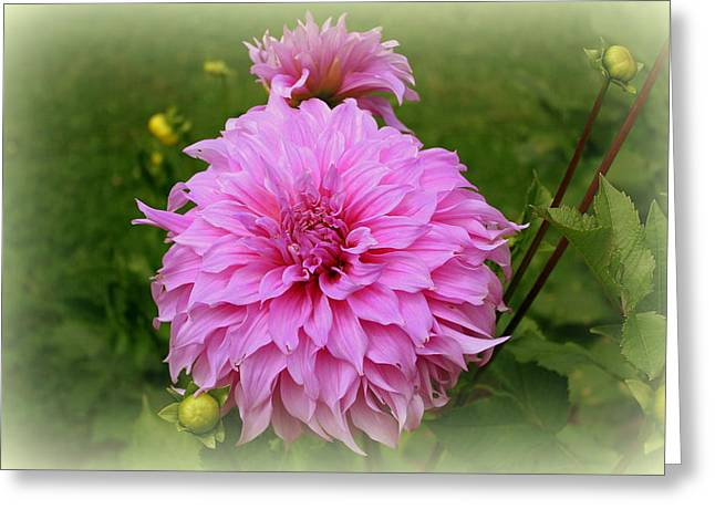 Pink Dahlia Greeting Card by Donna Walsh