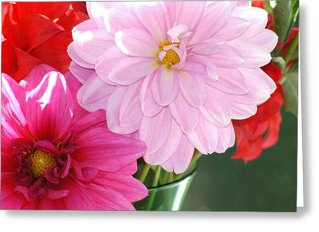 Pink Dahlias In The Morning Greeting Card by Lehua Pekelo-Stearns