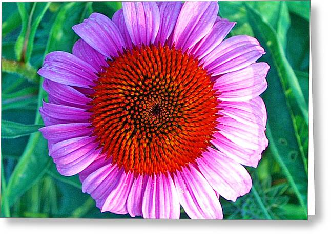 Pink Daisy By Jan Marvin Greeting Card
