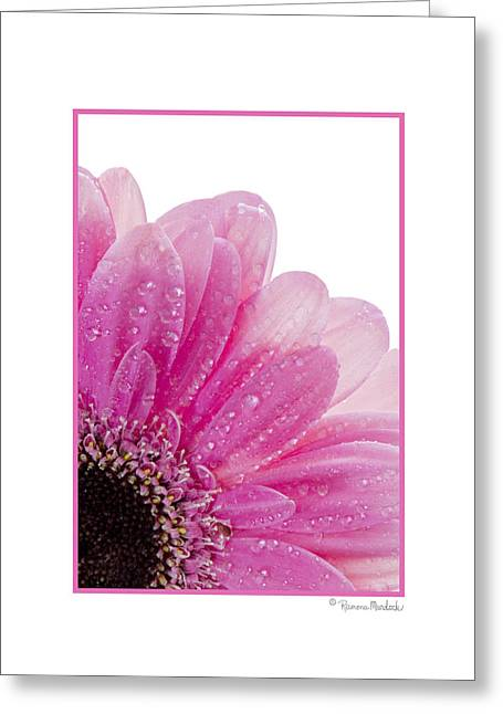 Pink Daisy Petals Greeting Card