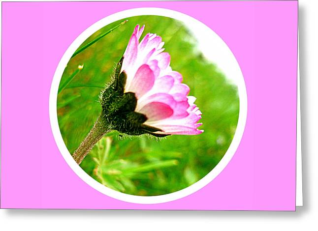 Pink Daisy  Greeting Card by The Creative Minds Art and Photography
