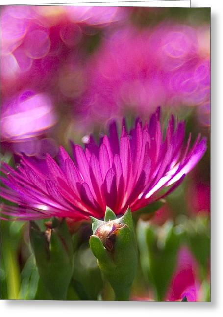 Pink Dance Greeting Card