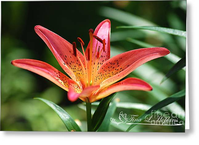 Pink Day Lily 20120614_41a Greeting Card by Tina Hopkins