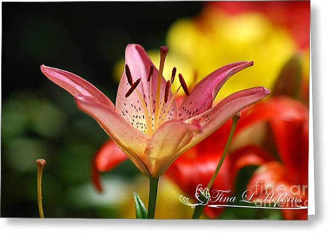 Pink Day Lily 20120614_47a Greeting Card by Tina Hopkins