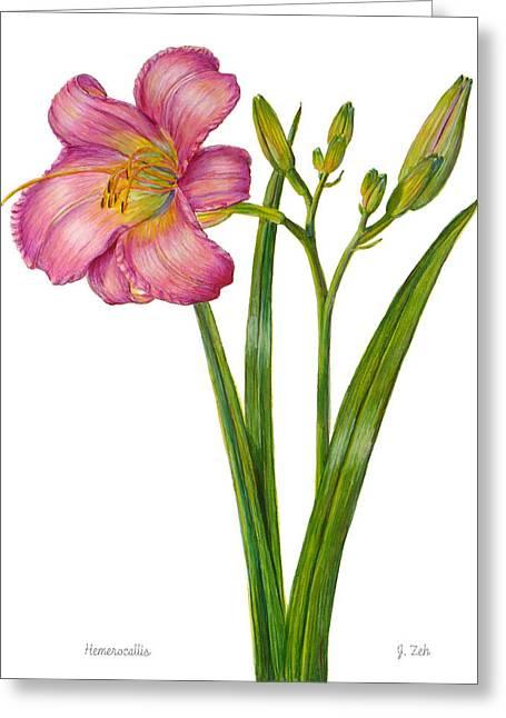 Pink Daylily - Hemerocallis Greeting Card by Janet  Zeh