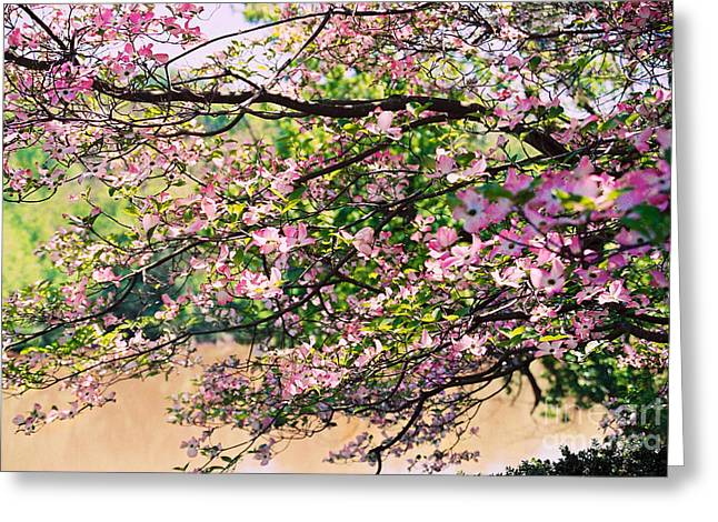 Pink Dogwood I Greeting Card by Anita Lewis