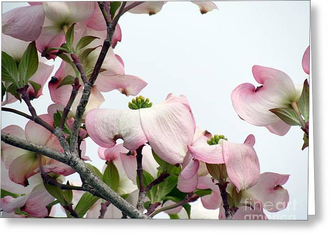 Pink Dogwood I Greeting Card