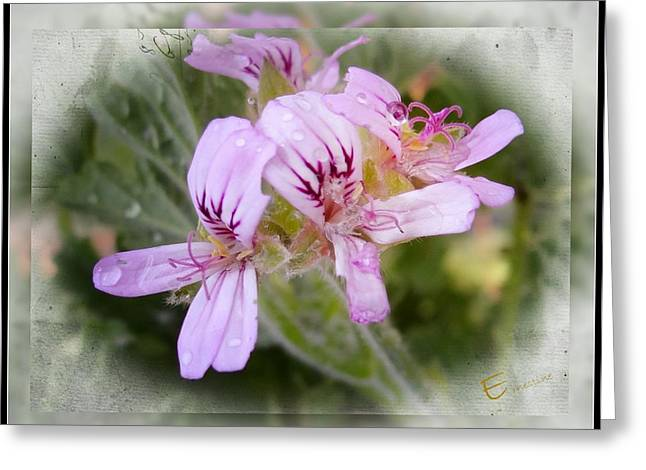 Pink Droplets Greeting Card by Ernestine Manowarda