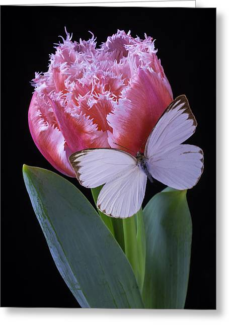Pink Dutch Tulip With Butterfly Greeting Card by Garry Gay