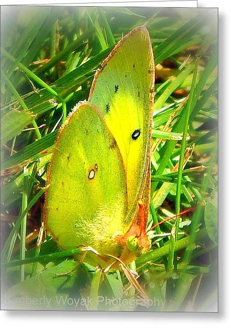 Pink-edged Sulphur Greeting Card