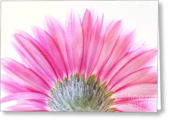 Pink Fan Greeting Card by Andrea Kollo