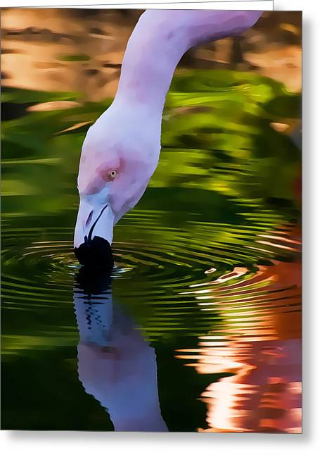 Pink Flamingo Ripples And Reflection Greeting Card