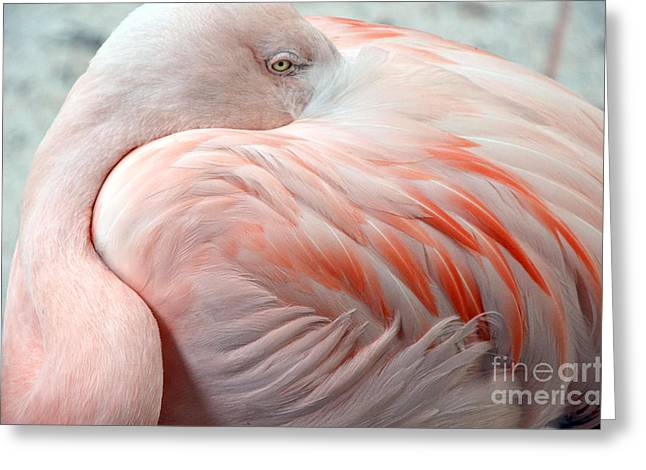 Greeting Card featuring the photograph Pink Flamingo II by Robert Meanor