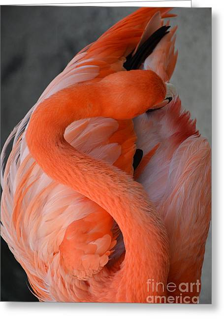 Pink Flamingo Greeting Card
