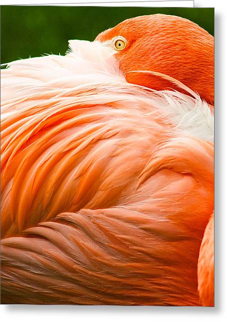 Pink Flamingo Greeting Card by Viacheslav Savitskiy