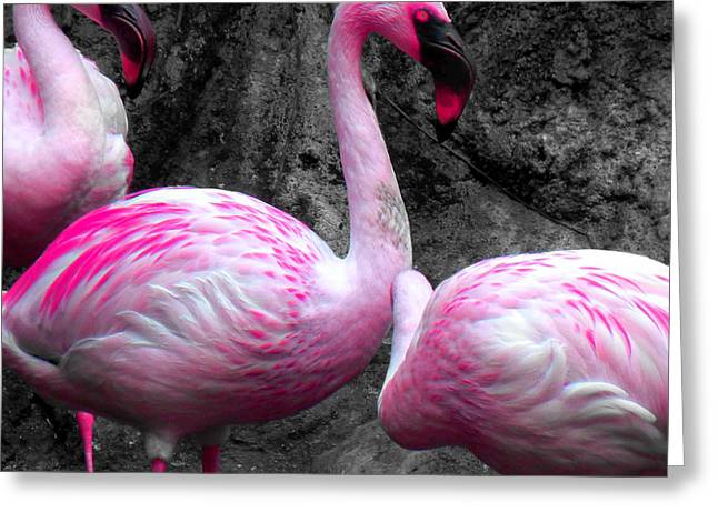 Greeting Card featuring the photograph Pink Flamingos by J Anthony