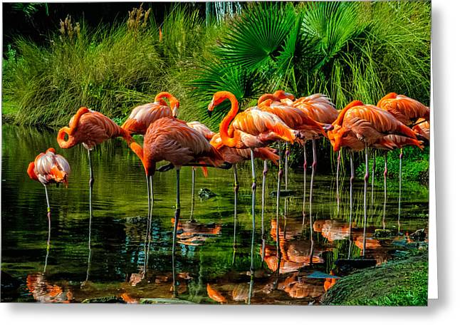 Greeting Card featuring the photograph Pink Flamingos by Louis Dallara